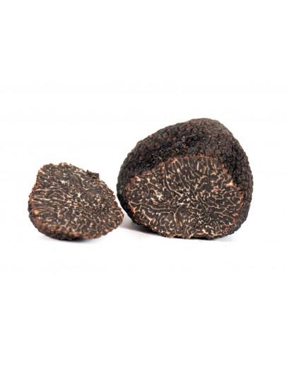Truffe de Bagnoli fraîche Mesentericum A-qualité
