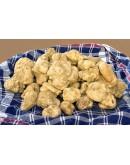 Truffes blanches fraîches d Alba Magnatum A-qualité
