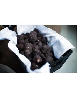 Truffes noires fraîches d'hiver Brumale A-qualité