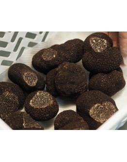 Truffes fraîches du Périgord Noir Melanosporum Qualité Supérieure