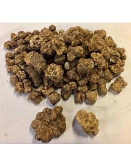 Truffes blanches fraîches d Alba Magnatum B-qualité