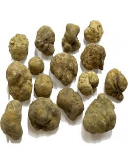 Truffes blanches fraîches Tuber Magnatum C-qualité