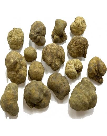 Truffes blanches fraîches Tuber Magnatum C-qualité Espèce truffe, Frais Tuber Magnatum image