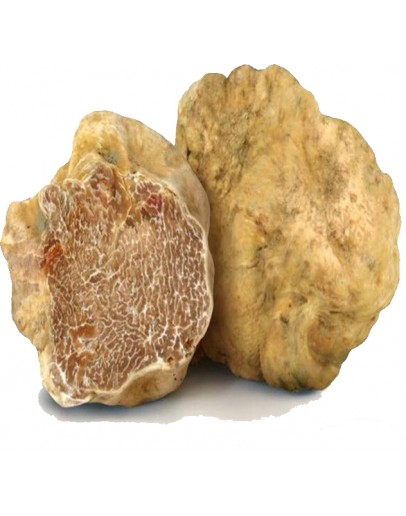 Truffes blanches fraîches Tuber Magnatum Qualité supérieure Espèce truffe, Frais Tuber Magnatum image