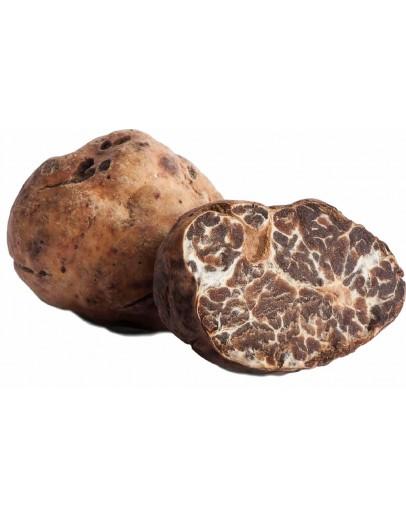Truffes Bianchetti fraîches (Tuber Albidum Pico) A-qualité Truffes Fraîches, Espèce truffe, Frais Tuber Borchii image