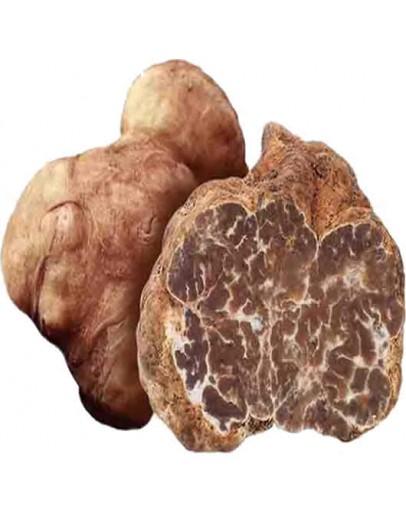 Truffes Bianchetti fraîches (Tuber Albidum Pico) Qualité Supérieure Truffes Fraîches, Espèce truffe, Frais Tuber Borchii image