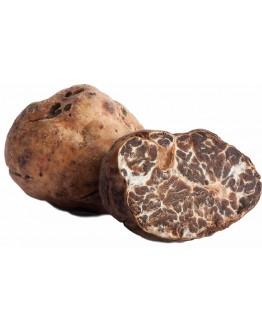 Truffes blanches fraîches Borchii A-qualité
