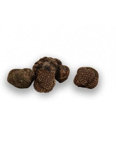 Noir frais truffes Bourgogne Uncinatum C-qualité